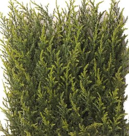 Cypress hedge, UVSAFE 25*25cm 77tips, 2tone green