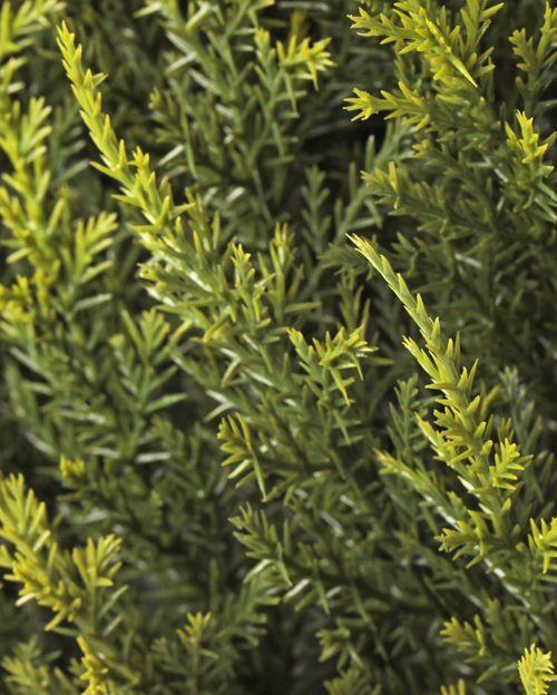 Zypressen-Heckenelement, UV sicher, 25*25cm, 77 tips, 2 Grüntöne