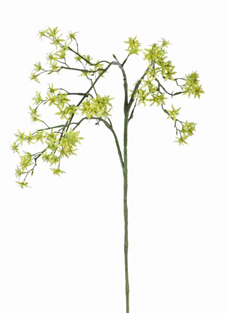 Deutzia (Bruidsbloem) met 92 bloemen, 90 cm