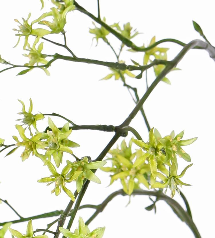 Deutzien - Deutzia mit 92 Blüten, 90cm