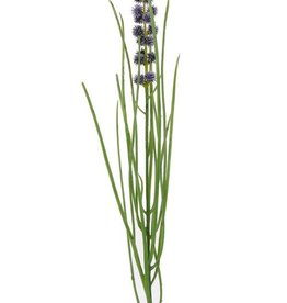 Grass flowering, 50cm - special offer