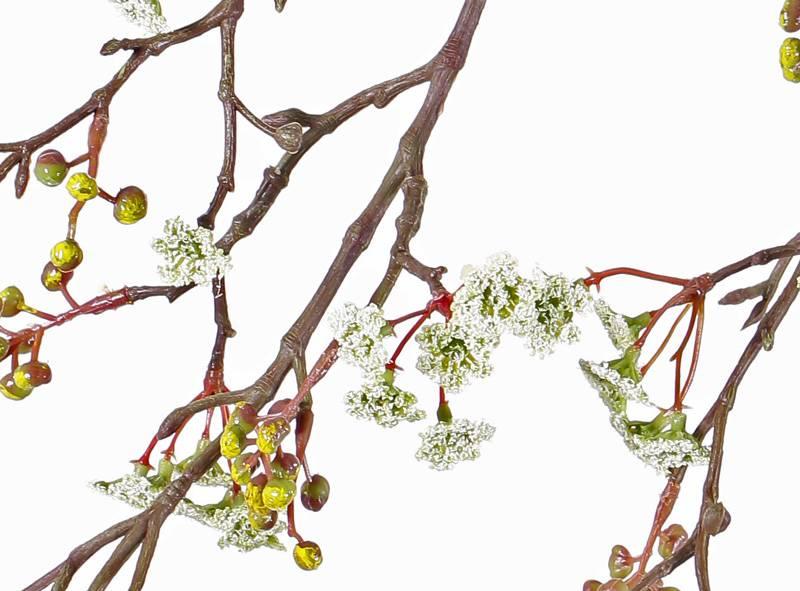Rama de arce (Acer) , 10 grupos de flor & 15grupos de bayas, 96 cm