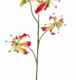 "Lelie gloriosa ""Liv"", Ruhmeskrone, 3 Blumen,  1 Knospe,  80 cm"