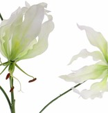"Lelie gloriosa ""Liv"", 3 flrs, 1 bud, 80 cm"