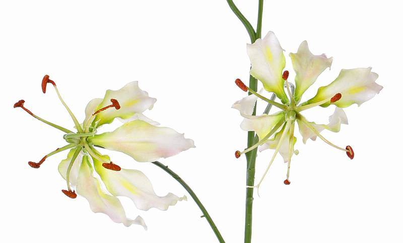 "Lelie gloriosa ""Liv"", 3 flowers, 1 bud, 80 cm"