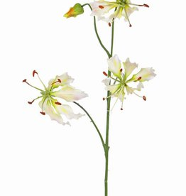 "Lelie gloriosa ""Liv"", 3 Blumen,  1 Knospe,  80 cm"