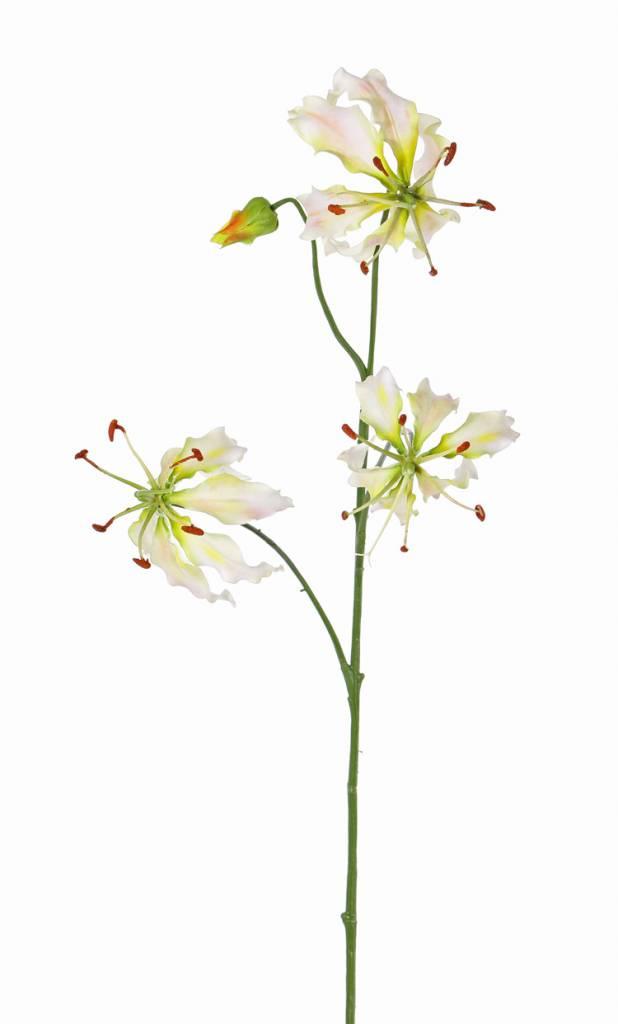 "Lelie gloriosa ""Liv"", 3 bloemen,   1 knop, 80 cm"