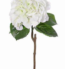 "Hortensie ""Sensitive"", Ø 18cm, 52 Blüten"