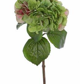"Hydrangea ""Sensitive"", flowerhead: Ø 18cm"