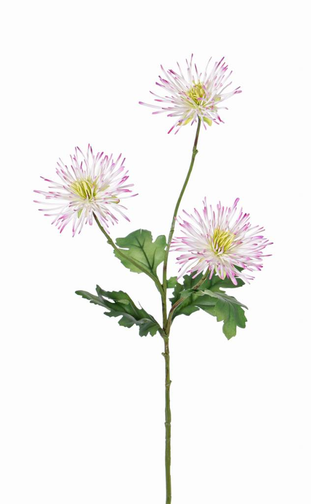 "Chrysanth ""spider"", 3 flowers  &  4 leaves, 73 cm"