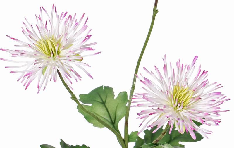 """Chrysant """"spider"""" met 3 bloemen & 4 bladeren, 73 cm"""