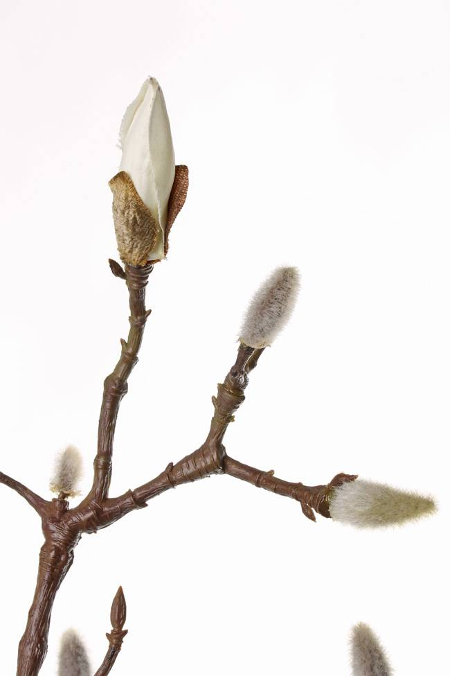 Magnolia branch with 19 buds 71cm coated