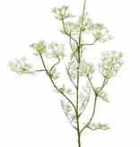 Rama de eneldo (Anethum graveolens),  11 racimos de flores, 13 conjuntos de hojas, 78 cm