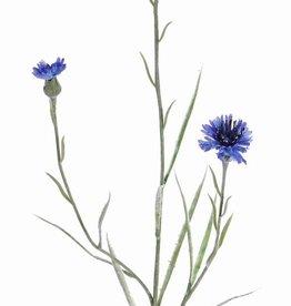 Kornblume (Centaurea cyanus) 2 Blumen, 1 Knospe, beflockt, 70cm