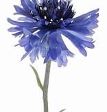 Kornblume (Centaurea cyanus) 2 Blumen, 1 Knospe, beflockt, 70 cm