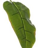 Bananenblad medium coated 96cm