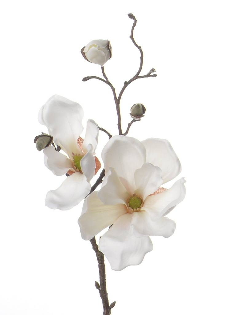 Magnolia steek, met 2 bloemen en 4 grote knoppen, 48cm
