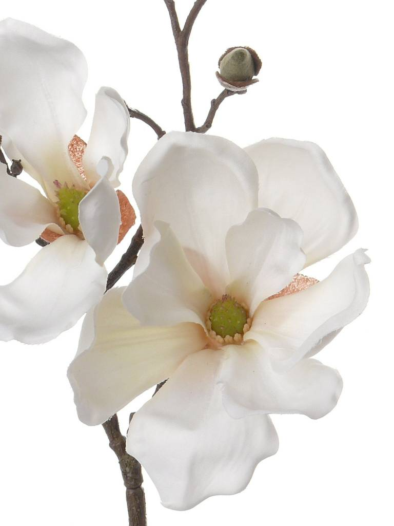 Magnolia with 2 flowers, 4 buds,  pick, 48cm