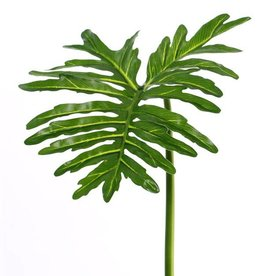 "Philodendron Selloum ""sapa"", grande, Ø 40cm, 90cm"