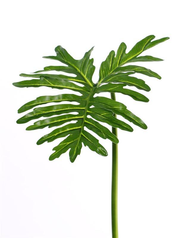 "Philodendron Selloum ""sapa"", gross, Ø 40cm, 90cm"