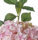 "Hortensia JUMBO ""Jade Collection"""