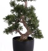 Bonsai ceder 9 Zweige, 127 Blätter, H 36 cm