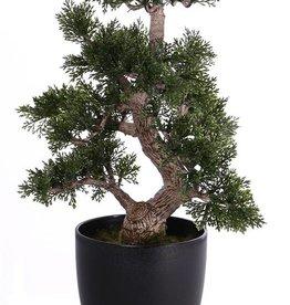 Bonsai ceder 9 branches, 127 leaves, in pot, h 36cm