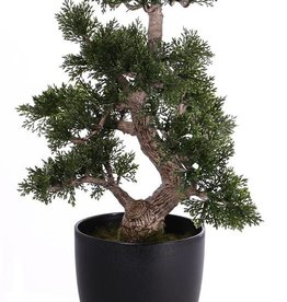 Bonsai ceder 9 branches, 127 lvs, in pot, h 36cm