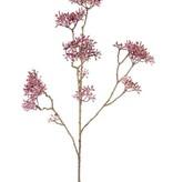 Dogwood  (Cornus) x13 clusters, 70cm