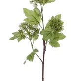 Viburnum / Schneeball, 3 clusters, 10 Blätter, 60cm