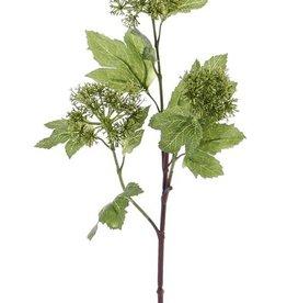 Viburnum, 3 grupos, 10 hojas, 60cm