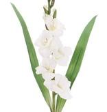 Gladiolus Spray with 5 flowers, 8 buds & 2 leaves, 83cm