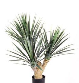 Yucca rostrata with 3 stems, 141 plastic lvs, 70cm UV safe