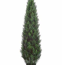 Cedar tree plastic x180 clusters, UVsafe, 180cm in pot