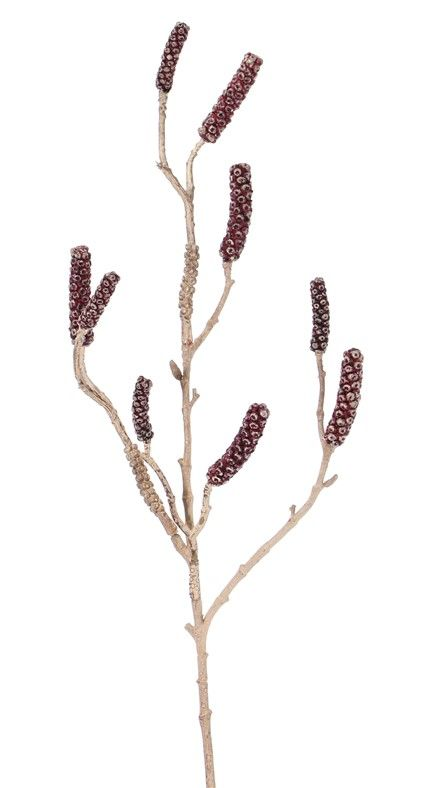 Callistemon - Bottlebrush with 9 seed capsules, 90cm