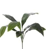 Aspidistra eliator bush met 8 bladeren, 78cm, speciale prijs