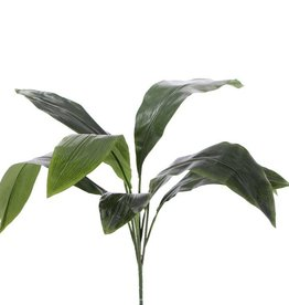 Aspidistra eliator bush met 8 bladeren, 78cm