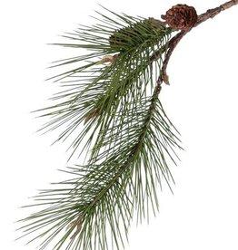 Dennentak grof (Pinus sylvestris) medium  x3, 2 dennenappels, 12 knoppen, 68cm