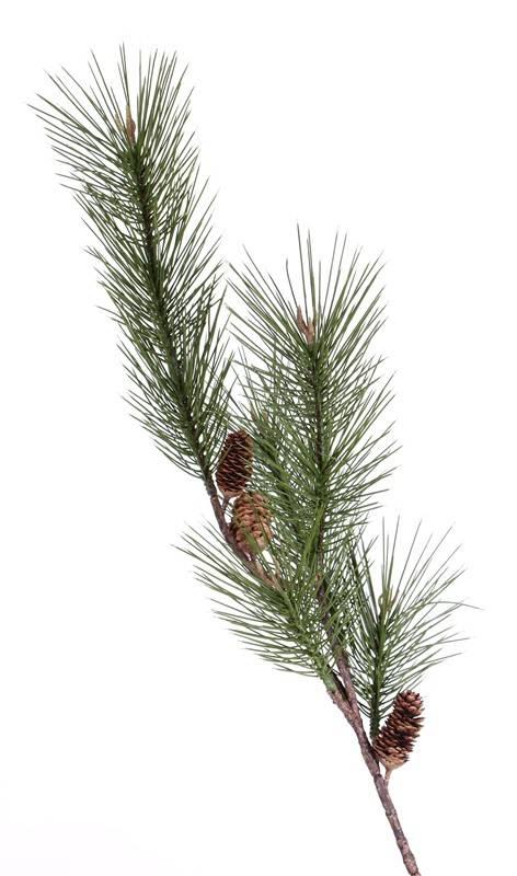 Tannenzweig (Pinus sylvestris) groß, mit Zapfen, 124cm