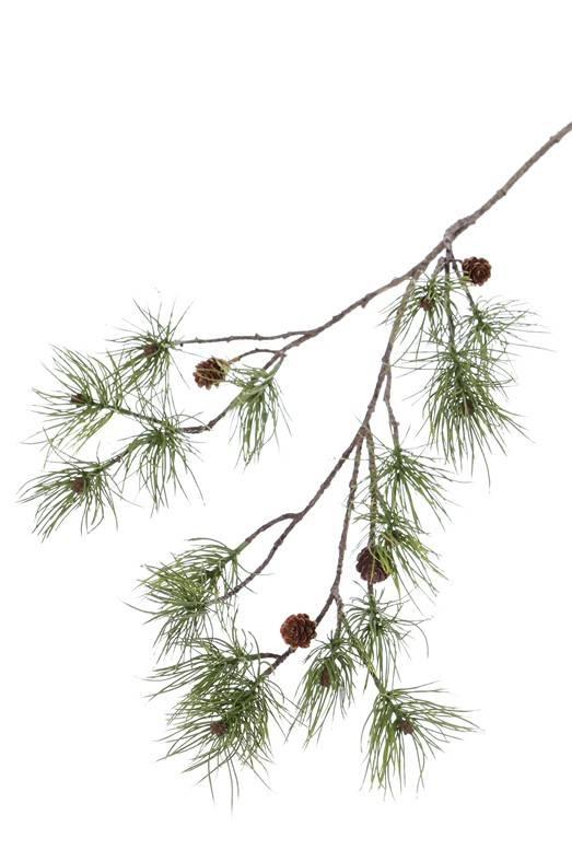 Dennentak (Pinus), 4 real cones, 17 pine clusters, 110cm