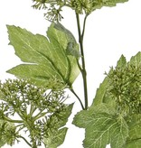 Snowball (viburnum) budsspray, 3 clusters, 10 leaves., 60cm