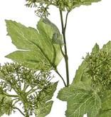 Viburnum / Sneeuwbal budsspray, 3 clusters, 10 bladeren, 60cm