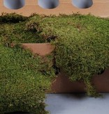 Moss 2Kg