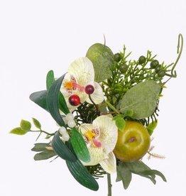 Phalaenopsis/Apple & Pine Pick 17cm