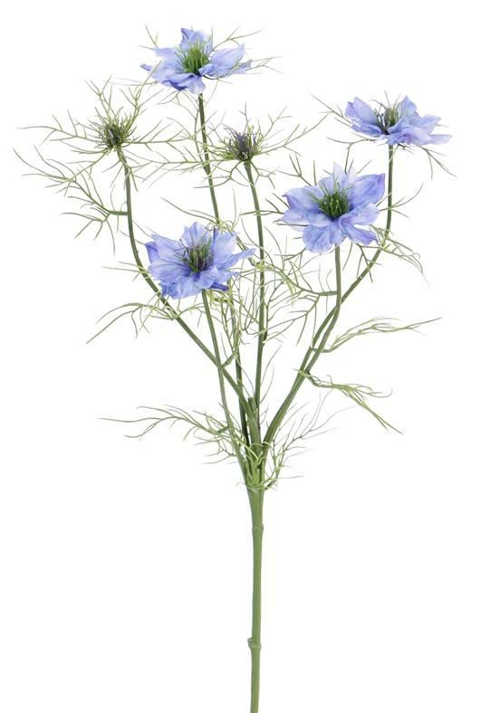 Nigella (Jungfer im Grünen) 6 Verzweigungen, 4 Blumen, 2 Knospen, 15 Blattsets, 66cm