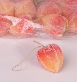 Physalis hanger Ø ca. 4cm, 12 pieces in polybag - special offer