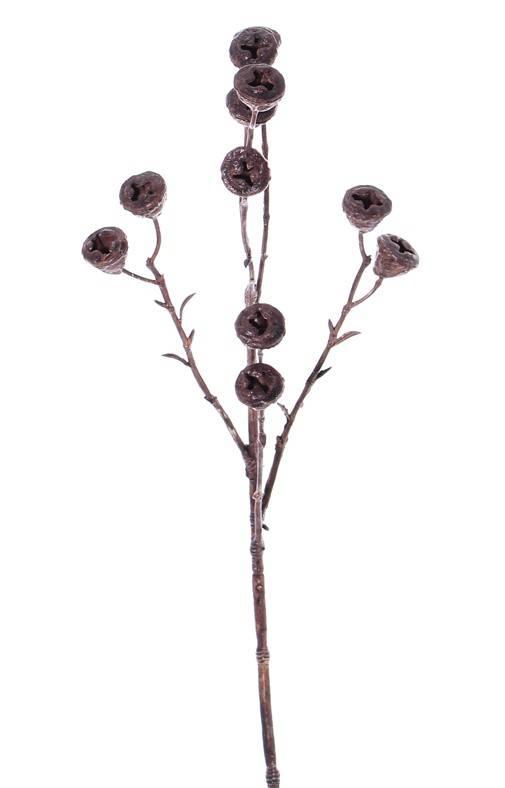 Rama de frutos de Eucalipto 'Dried Nature', 11 frutos, 63 cm