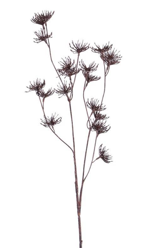 "Wilde peenspray (Daucus carota), ""Dried Nature"", 20 clusters bld, 66cm"
