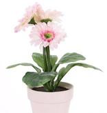 Gerberaplant met 3 bloemen (ø9.5cm) & 5 blad, in pot (ø11cm)
