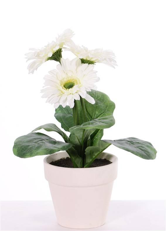 Gerberaplant met 3 bloemen (ø9.5cm) & 5 blad, in pot ø11cm